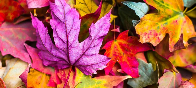 leaves-of-all-colors