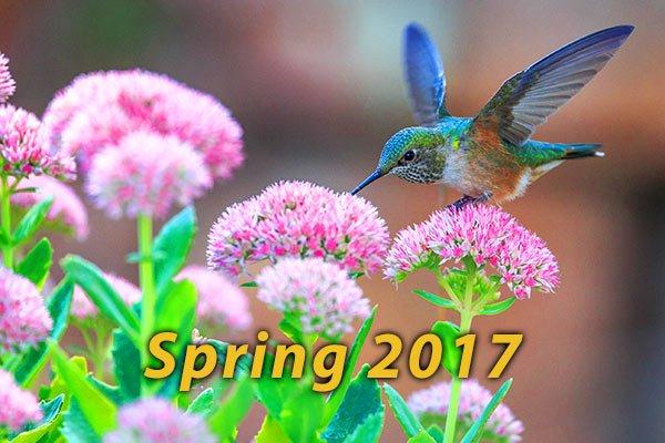 SON-Spring-2017-600x400-1