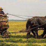 Field-Work-Farm_555x300