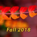 SON-Fall-2018