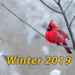 SON-Winter-2019